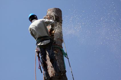 Potatura alberi da fusto