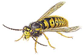 vespa comune