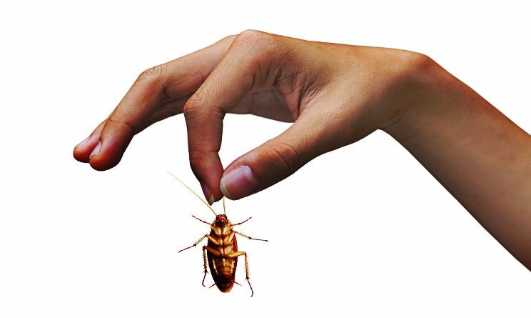 Per eliminare gli scarafaggi fanno esplodere una casa
